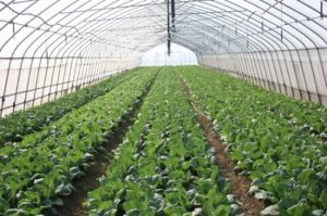 What is Tony's Organic Farm?